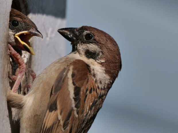 Save the Sparrow Project